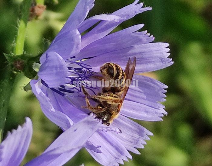 Unimore ha organizzato il congresso internazionale MedPalynoS2021 su studi del polline, qualità dell'aria e trasformazioni ambientali